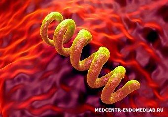 Treponema pallidum -бледная спирохета.  Госпитальный комплекс.